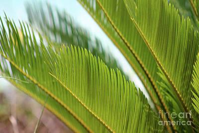 Photograph - Palm Fronds #2 2016 by Karen Adams