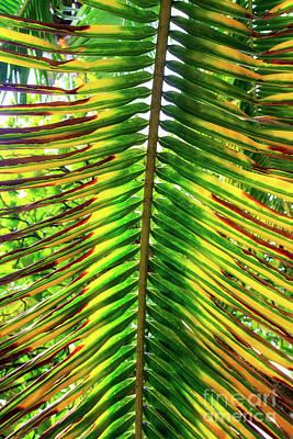 Photograph - Palm Fronds At Isla Zapatillas Panama by John Rizzuto