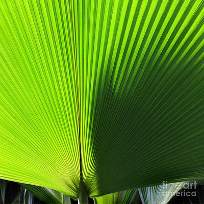 Photograph - Palm Fronds Square by Karen Adams
