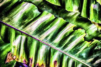 Photograph - Palm Fronds Up Close by Brett Christensen