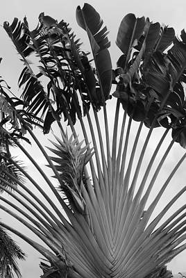 Palm Frons Art Print by Rob Hans