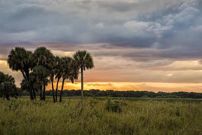 Photograph - Palm Gathering by Jon Glaser