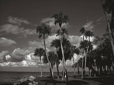 Monochrome Photograph - Palm Group In Florida Bw by Susanne Van Hulst