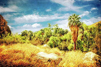 Photograph - Palm Grove by Sandra Selle Rodriguez