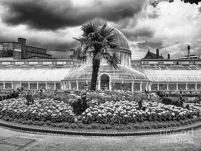Photograph - Palm House by Jim Orr