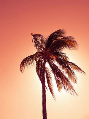 Palm In The Bay Of Pigs, Playa Coco, Cuba Art Print by Ralf Martini
