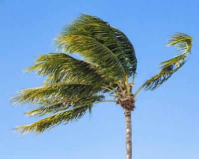 Photograph - Palm In The Wind by Bob Slitzan