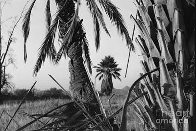 Photograph - Palm In View Bw Horizontal by Heather Kirk