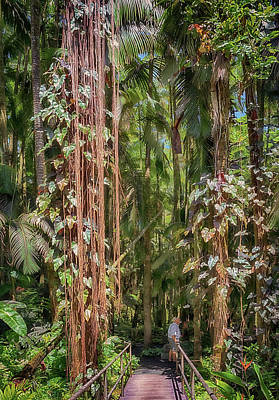 Photograph - Palm Jungle by Susan Rissi Tregoning