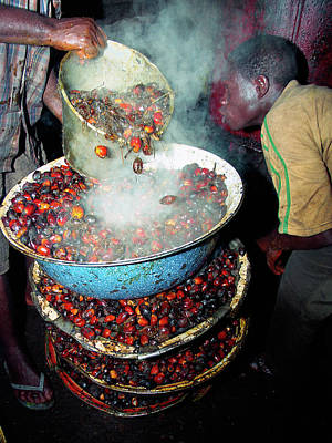 Photograph - Palm Kernel Fruits Boiling by Muyiwa OSIFUYE