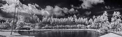 Infra-red Photograph - Palm Lagoon by Sean Davey