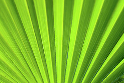 Palm Leaf Abstract Art Print