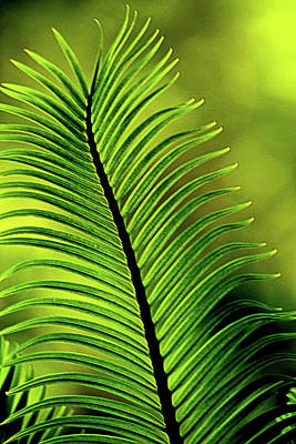 Photograph - Palm Leaf Abstract by Nadalyn Larsen