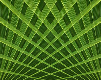 Photograph - Palm Leaf Composite by Dutch Bieber