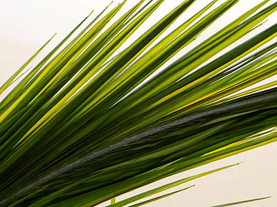 Photograph - Palm Leaf  by Debbie Oppermann