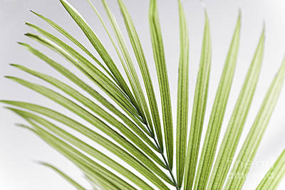 Bent Photograph - Palm Leaf by Elena Elisseeva