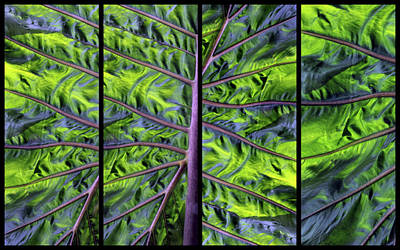 Photograph - Palm Leaf Panel by Jessica Jenney