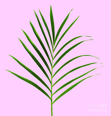 Palm Leaf Art Print by Tony Cordoza