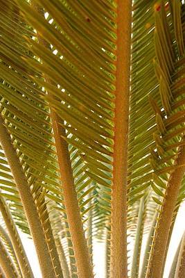 Photograph - Palm Leaves 01 by Dora Hathazi Mendes
