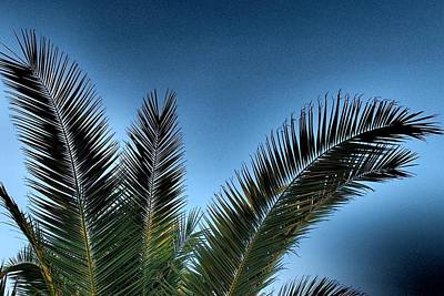 Photograph - Palm Leaves 05 by Dora Hathazi Mendes