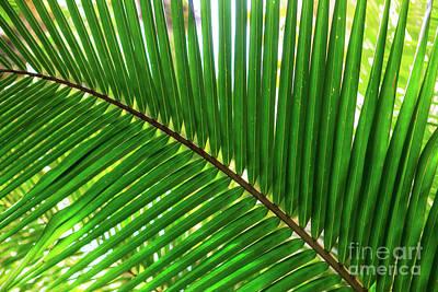 Photograph - Palm Leaves At Isla Zapatillas Panama by John Rizzuto