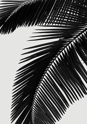 Monochromatic Digital Art - Palm Leaves Bw by Rafael Farias