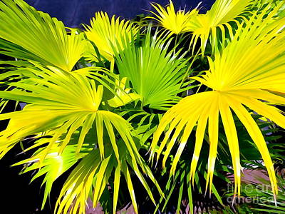 Photograph - Palm Leaves by Ed Weidman