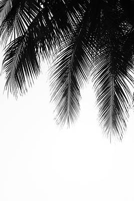 Photograph - Palm Leaves by Fine Arts