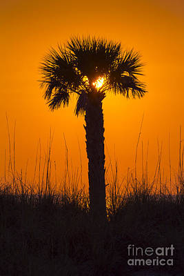 Ocean Springs Photograph - Palm Light by Marvin Spates