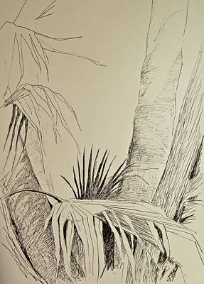 Fronds Drawing - Palm Lines by Bonnie See
