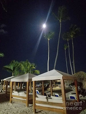 Photograph - Palm Moon by Kevin F Heuman