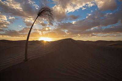 Photograph - Palm On Dune by Ibrahim Azaga