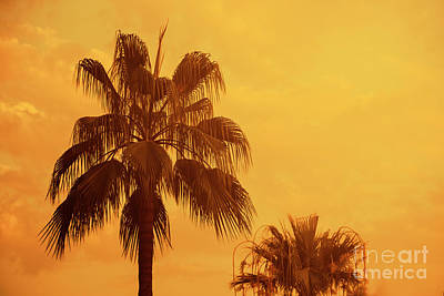 Photograph - Palm On Tropical Island by Jelena Jovanovic