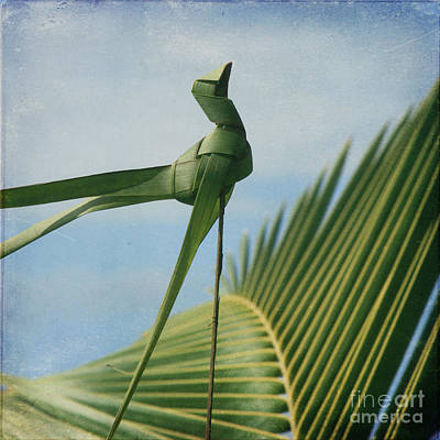 Photograph - Palm Origami by Sharon Mau