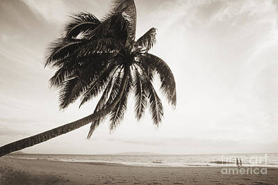 Overhang Photograph - Palm Over Beach by Ron Dahlquist - Printscapes