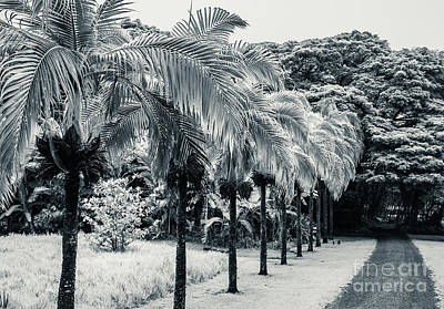 Photograph - Palm Path Kauai by Blake Webster