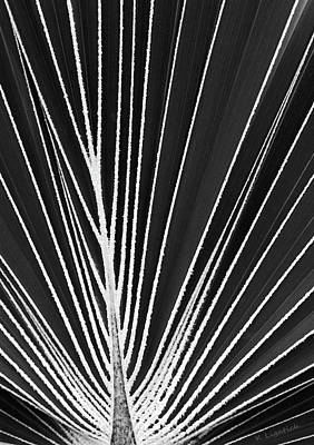 Digital Art - Palm Patterns Abstract - Black And White by Kerri Ligatich