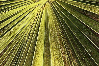 Digital Art - Palm Patterns I by Kerri Ligatich