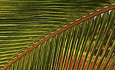 Digital Art - Palm Patterns Ill by Kerri Ligatich