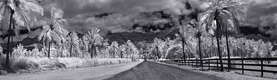 Infra-red Photograph - Coconut Drive by Sean Davey