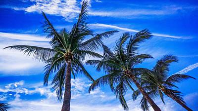 Photograph - Palm Row Blues by Lawrence S Richardson Jr