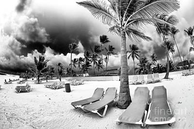 Photograph - Palm Shade by John Rizzuto