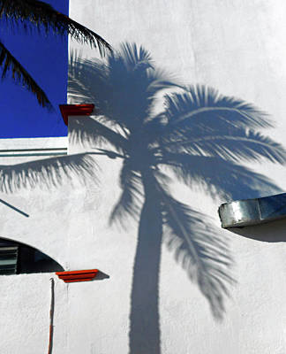 Photograph - Palm Shadow 1 by Ron Kandt