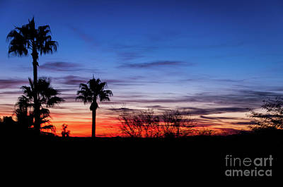 Photograph - Palm Shadows II by Deborah Klubertanz