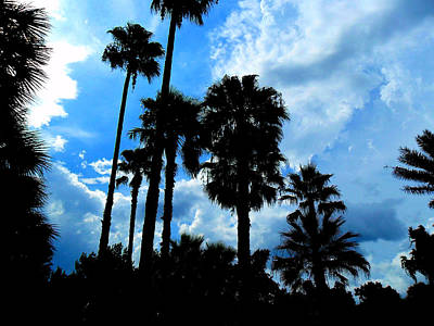 Photograph - Palm Silhouette And Blue Sky by Sheri McLeroy