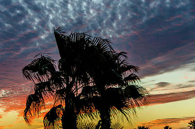 Photograph - Palm Silhouette At Sunset by Debra Martz