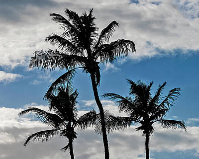 Photograph - Palm Silhouette by Bob Slitzan