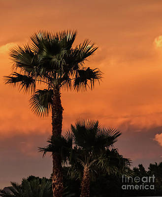 Photograph - Palm Silhouette by Robert Bales