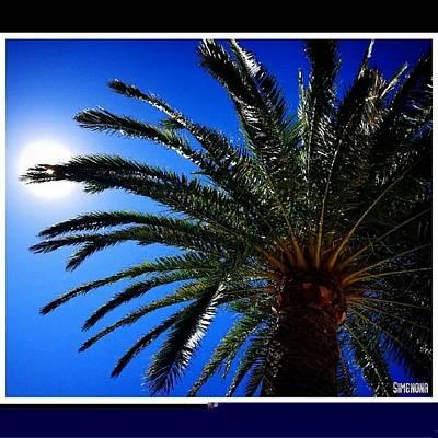 Mixed Media - Palm by Simenona Martinez