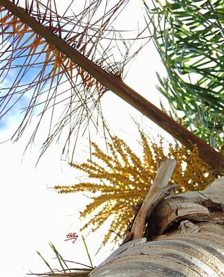 Photograph - Palm Sky View by Linda Hollis
